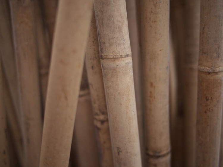 Bamboo-Poles - Cut & Dried From $5 to $20