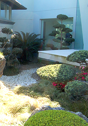 Cloud Pruned Buddhist Pine - Private Garden by Imperial Gardens Landscape